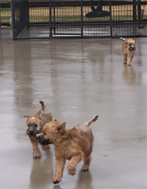 Rain Puppies